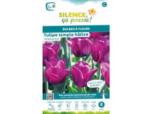 Tulipe simple hative purple prince - Calibre 12/+ - X8