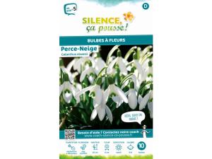 Perce neige galanthus elwesii - Calibre5/6 - X10