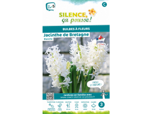 Jacinthe de Bretagne - Blanche - Calibre 15/16 - X3