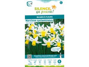 Narcisse clyclamineus jack snipe - Calibre 12/14 - X6