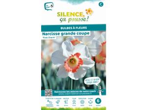 Narcisse grande coupe pink charm - Calibre 12/14 - X6