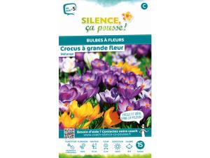 Crocus grande fleur - Variés - Calibre 8/9 - X15