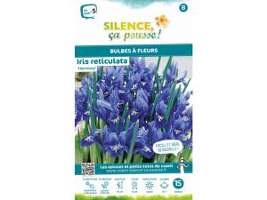 Iris reticulata harmony - Calibre 5/+ -X15