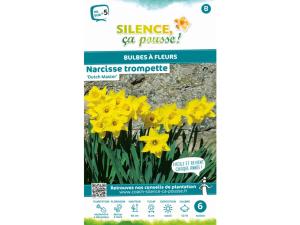 Narcisse trompette dutch master - Calibre 12/14 - X6