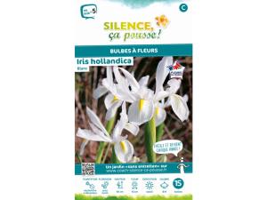 Iris hollandica - Blanc - Calibre 8/9 -X15