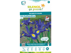 Iris hollandica - Bleu - Calibre 8/9 - X15