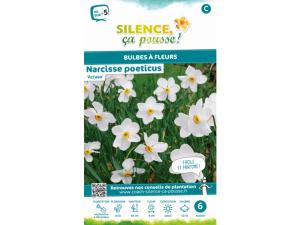 Narcisse poeticus actaea - Calibre 12/14 - X6