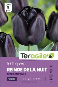 Tulipe simple tardive reine de la nuit - Calibre 12+