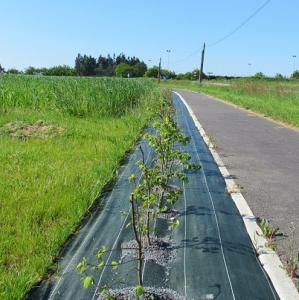 Toile paillage vert - Magasin Vert - 90 gr - 1,50x25 m