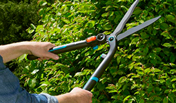 Outils entretien arbres et arbustes
