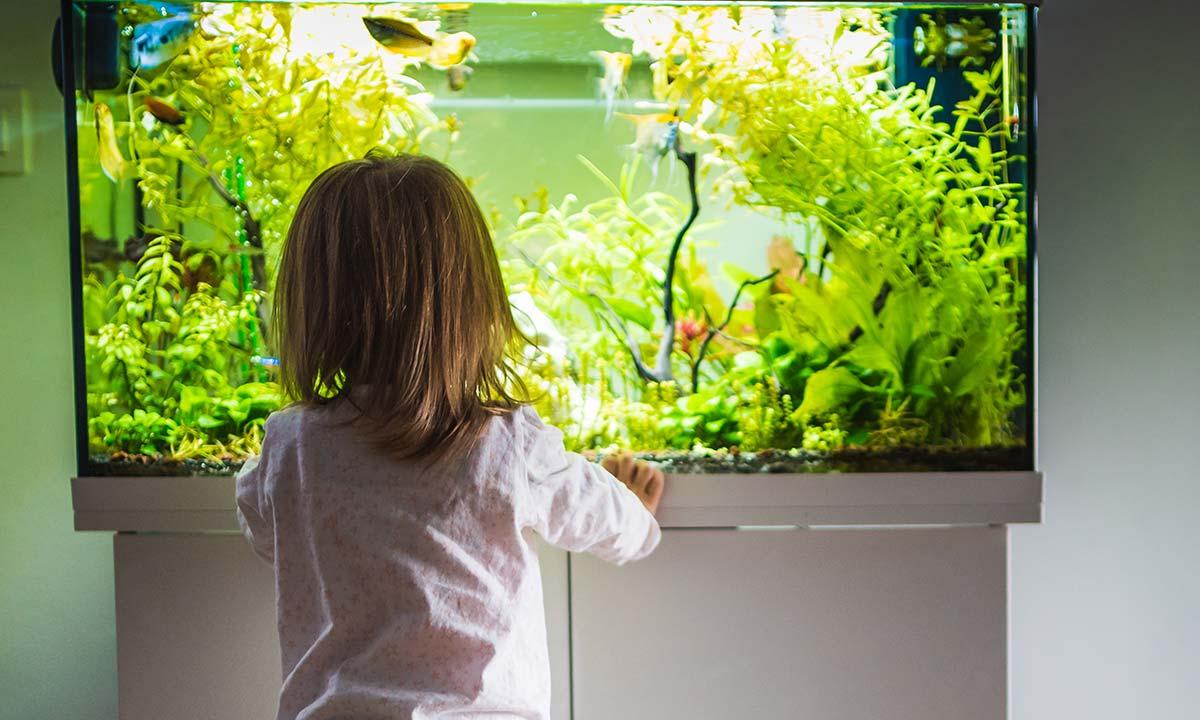 aquarium-plantes-naturelles-poissons-enfants-maison