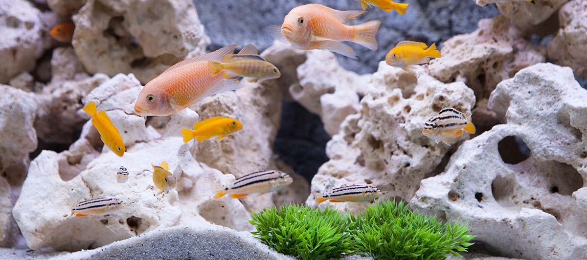 Aquarium poissons décor et plantes aquatiques