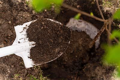 Plantation jardin fertiliser terre naturellement bio