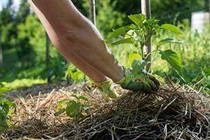 permaculture potager paillage jardin écologique