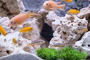 Aquarium décor roches plantes