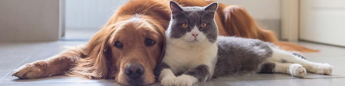 Animaux de compagnie chien et chat