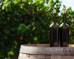 Vin vigne tonneau