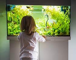Aquarium poisson enfant maison